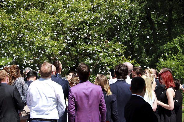 Una pioggia di farfalle bianche, sposi e ospiti festeggiano la promessa di matrimonio
